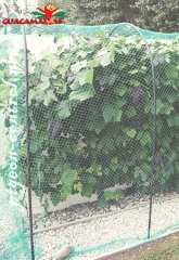 metal arc with bird netting for protection of crops against birds.
