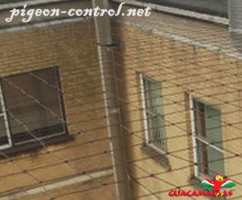 anti bird net installed on the house.