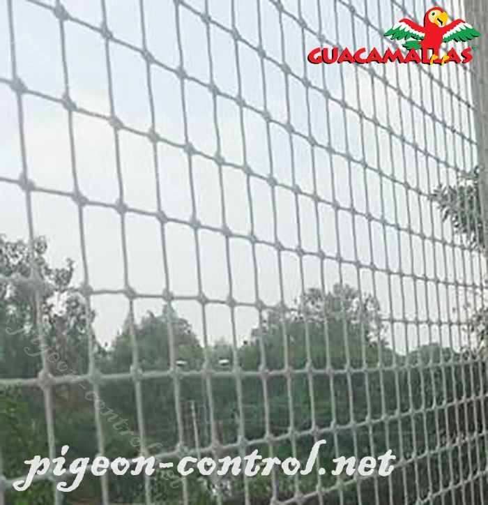 anti bird netting installed of avoid the approach of the birds